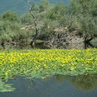 "Green Tank comments on the draft law ""Modernization of Environmental Legislation"""
