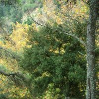 Environment or development: An old dilemma reemerges
